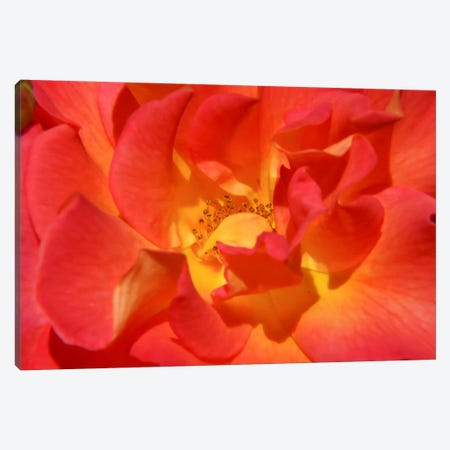 Bloomin Bright Canvas Print #ESC71} by Eric Schech Canvas Wall Art