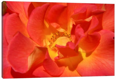 Bloomin Bright Canvas Print #ESC71