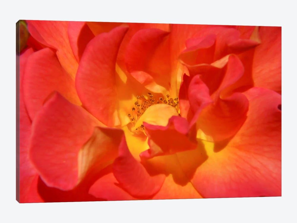 Bloomin Bright by Eric Schech 1-piece Canvas Art