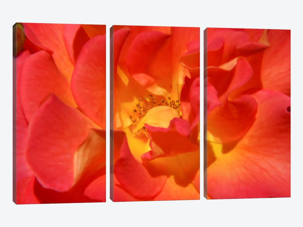 Bloomin Bright by Eric Schech 3-piece Canvas Art