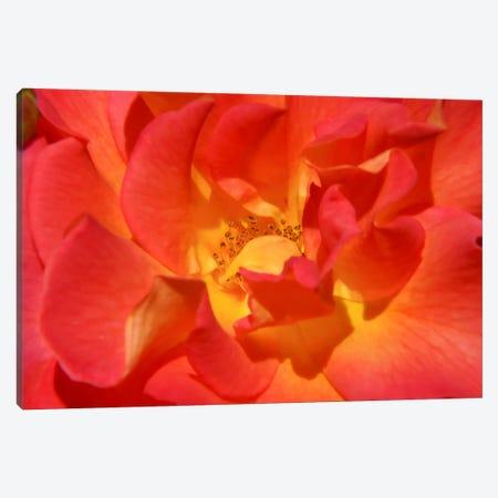 Bloomin Bright Canvas Print #ESC71} by Eric Schech Canvas Wall Art