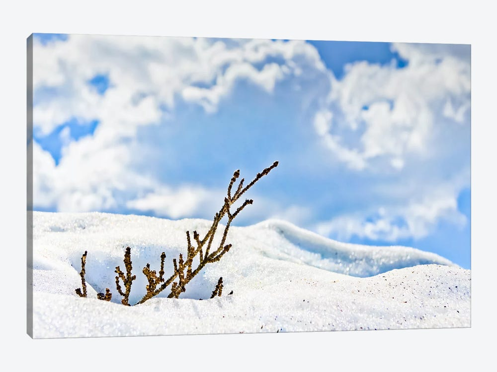 Winter Life by Eric Schech 1-piece Canvas Print