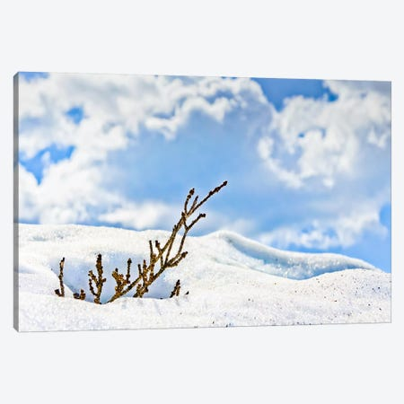 Winter Life Canvas Print #ESC74} by Eric Schech Art Print