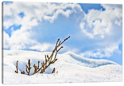 Winter Life Canvas Art Print