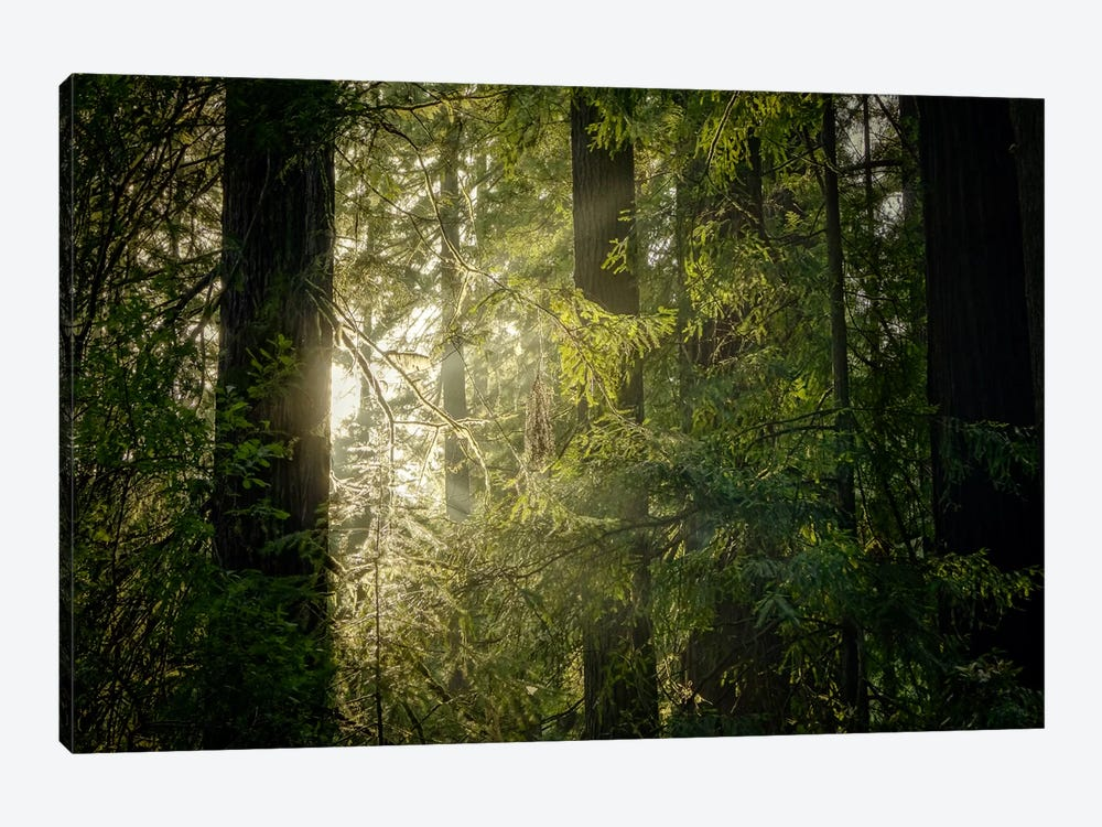 Peeking Sun by Eric Schech 1-piece Canvas Wall Art