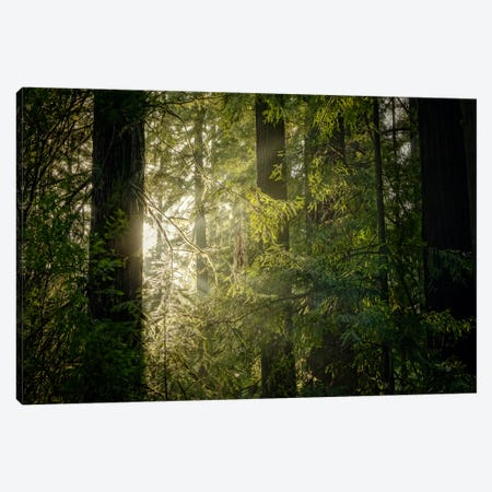 Peeking Sun Canvas Print #ESC75} by Eric Schech Canvas Print