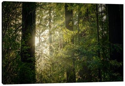 Peeking Sun Canvas Art Print