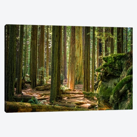 Green Woods Canvas Print #ESC78} by Eric Schech Canvas Wall Art