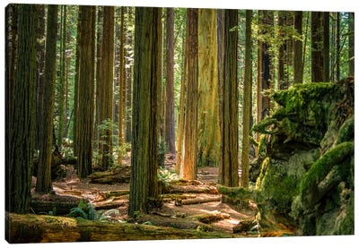 Green Woods Canvas Art Print