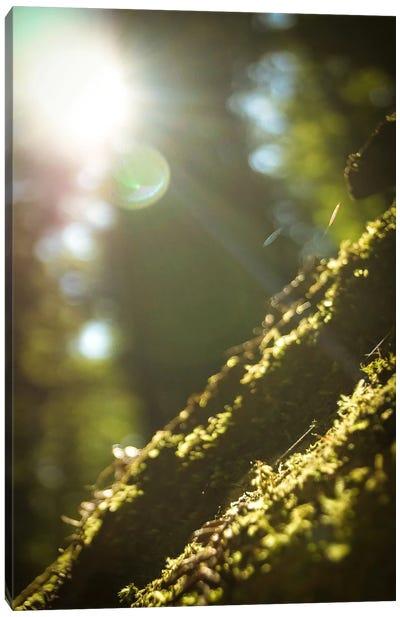 Into the Morning Light Canvas Print #ESC79