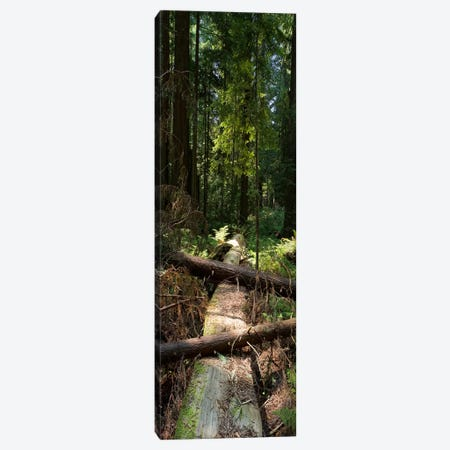 Log Bridge Canvas Print #ESC80} by Eric Schech Canvas Art Print