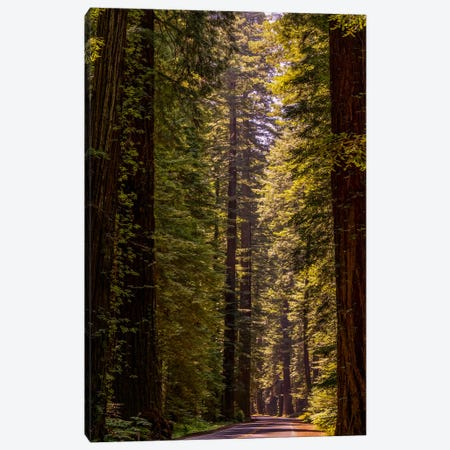Road Less Traveled Canvas Print #ESC81} by Eric Schech Canvas Print