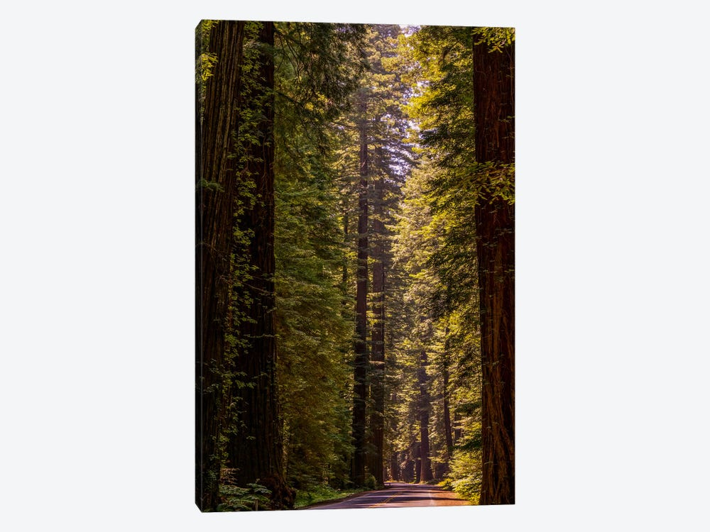 Road Less Traveled by Eric Schech 1-piece Canvas Art Print
