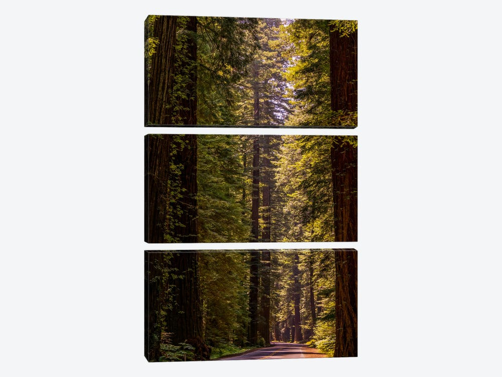 Road Less Traveled by Eric Schech 3-piece Canvas Print
