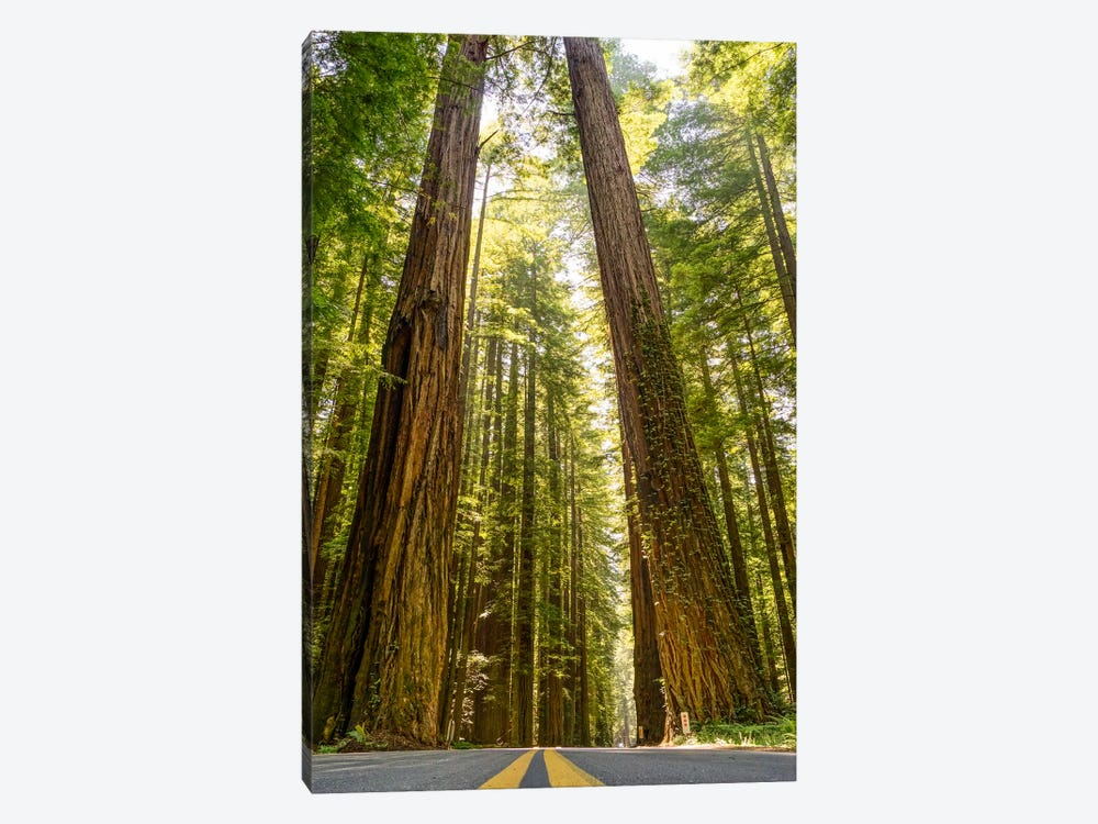 Red Wood Heights by Eric Schech 1-piece Canvas Print