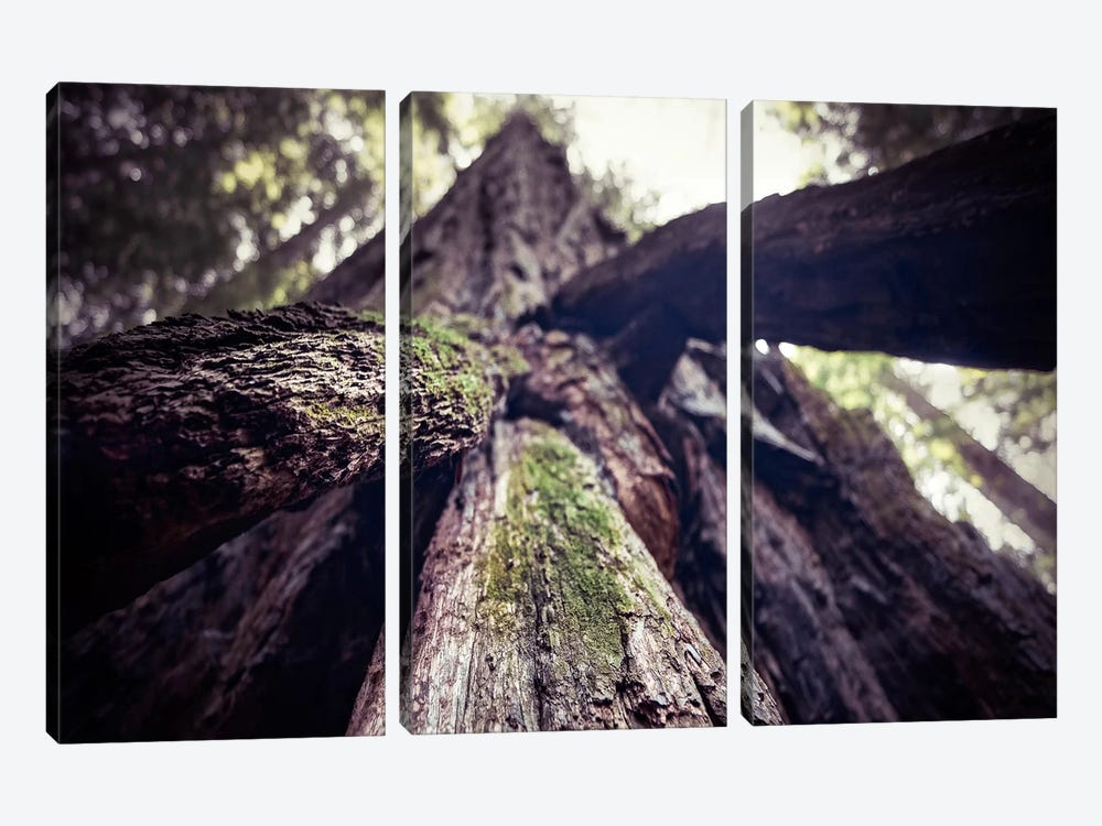 Mossy 3-piece Canvas Art