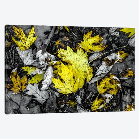 Yellow Canvas Print #ESC91} by Eric Schech Canvas Artwork