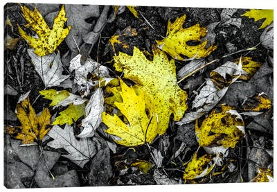 Yellow by Eric Schech Canvas Artwork