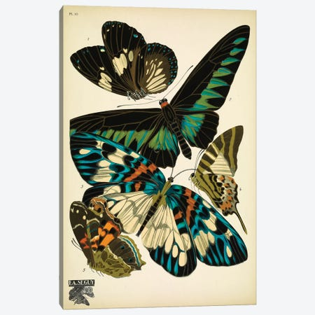 Papillons (Butterflies) X Canvas Print #ESE10} by Eugène Séguy Canvas Art