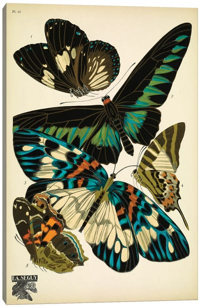 Papillons (Butterflies) X Canvas Art Print