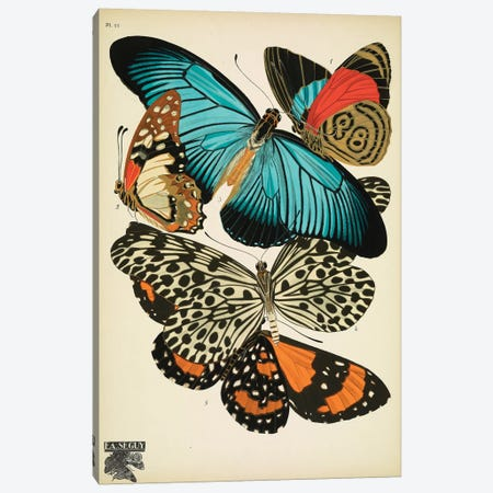 Papillons (Butterflies) XI Canvas Print #ESE11} by Eugene Seguy Canvas Artwork