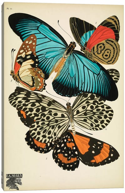 Papillons (Butterflies) XI Canvas Art Print