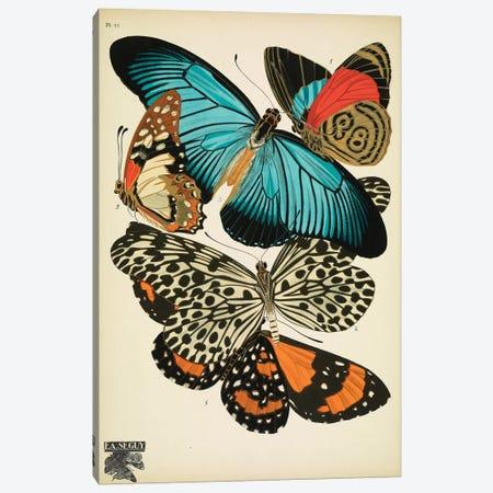 Papillons (Butterflies) XI Canvas Print #ESE11} by E.A. Séguy Canvas Artwork