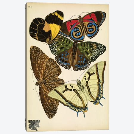 Papillons (Butterflies) XII Canvas Print #ESE12} by E.A. Séguy Canvas Artwork