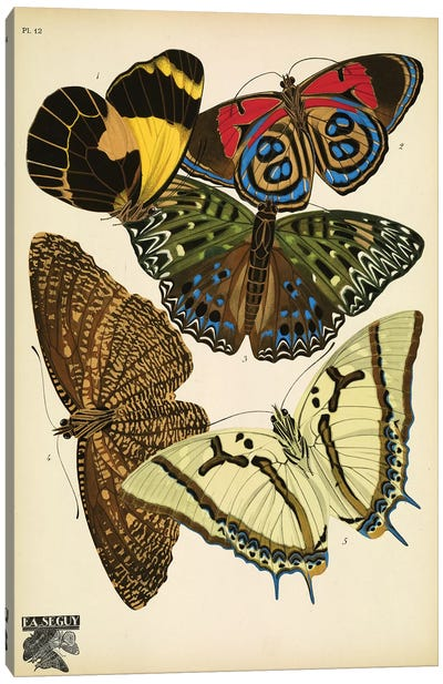 Papillons (Butterflies) XII Canvas Art Print