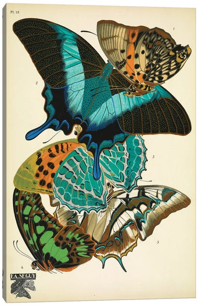 Papillons (Butterflies) XIII Canvas Art Print