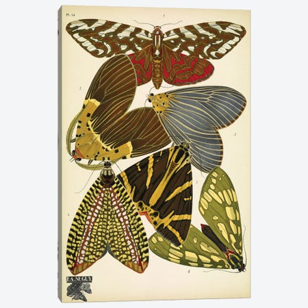 Papillons (Butterflies) XIV Canvas Print #ESE14} by Eugene Seguy Canvas Print