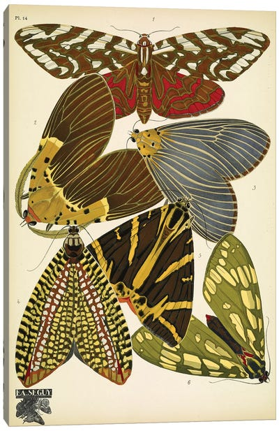 Papillons (Butterflies) XIV Canvas Art Print