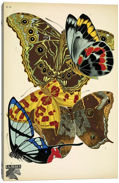 Papillons (Butterflies) XV Canvas Art Print