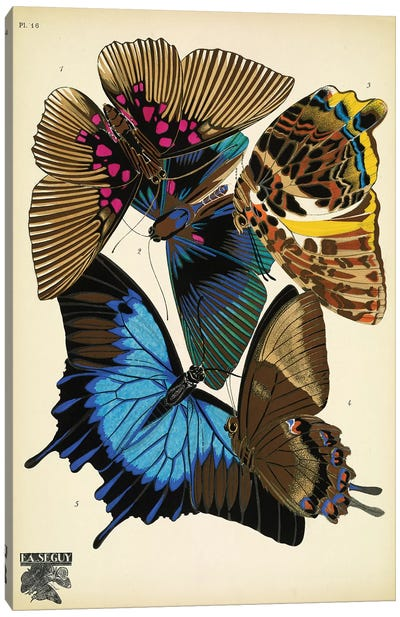 Papillons (Butterflies) XVI Canvas Art Print