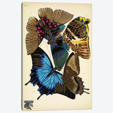 Papillons (Butterflies) XVI Canvas Print #ESE16} by E.A. Séguy Canvas Art Print
