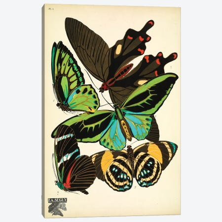 Papillons (Butterflies) I Canvas Print #ESE1} by E.A. Séguy Canvas Print
