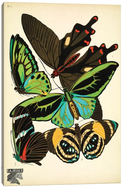 Papillons (Butterflies) I Canvas Art Print