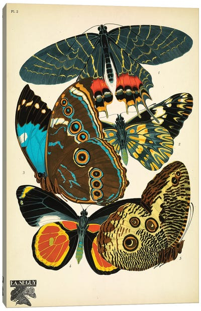 Papillons (Butterflies) II Canvas Art Print