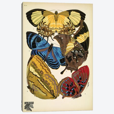 Papillons (Butterflies) IV Canvas Print #ESE4} by Eugène Séguy Canvas Wall Art