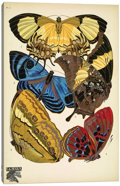 Papillons (Butterflies) IV Canvas Art Print