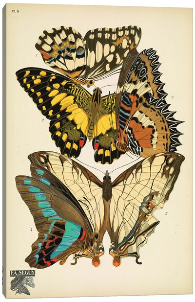 Papillons (Butterflies) IX Canvas Art Print