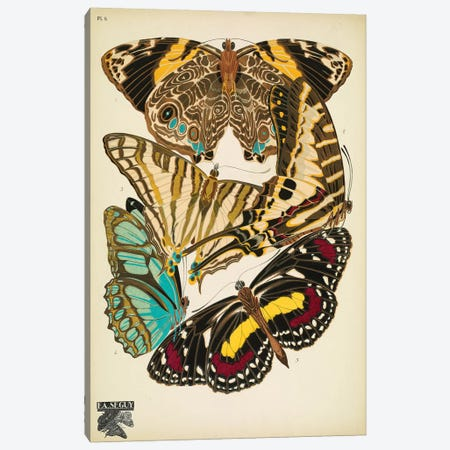 Papillons (Butterflies) V Canvas Print #ESE6} by E.A. Séguy Canvas Artwork