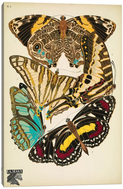 Papillons (Butterflies) V Canvas Art Print
