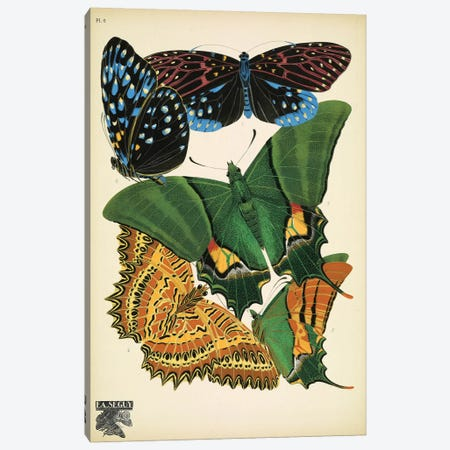 Papillons (Butterflies) VI Canvas Print #ESE7} by Eugène Séguy Canvas Wall Art