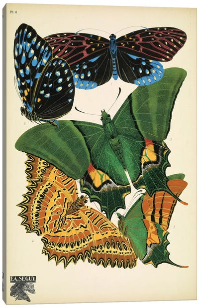 Papillons (Butterflies) VI Canvas Art Print