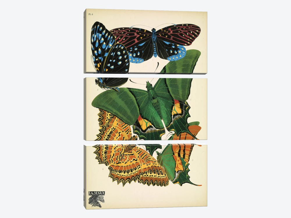 Papillons (Butterflies) VI by Eugène Séguy 3-piece Canvas Artwork