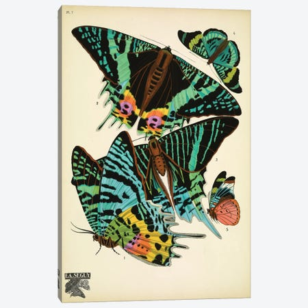 Papillons (Butterflies) VII Canvas Print #ESE8} by Eugene Seguy Art Print