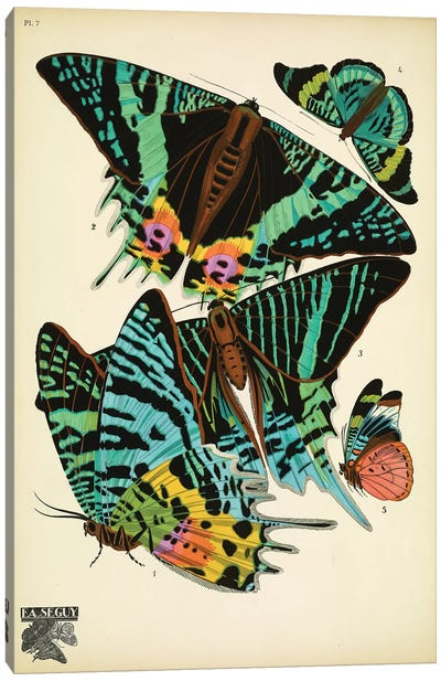 Papillons (Butterflies) VII Canvas Art Print