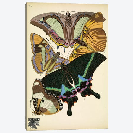 Papillons (Butterflies) VIII Canvas Print #ESE9} by Eugene Seguy Canvas Art Print