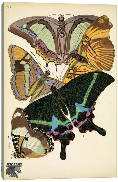 Papillons (Butterflies) VIII Canvas Art Print